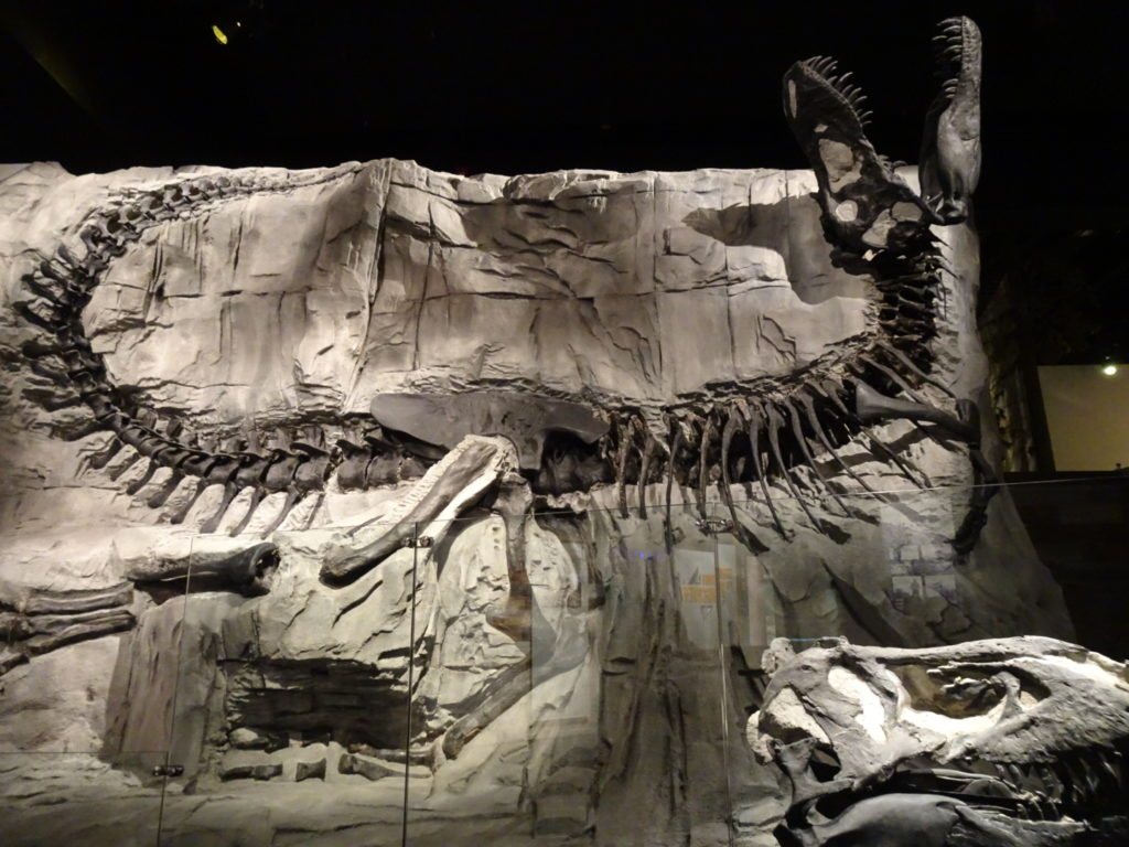 Unearthing your novel is a bit like digging up a fossil. Like these giant dinosaur bones displayed in the picture. You keep on digging, until you can see the whole thing in all it's glory. That's when you know the story has reached the end.
