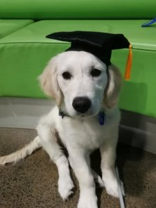 Nothing historical about Ashley's new little pup. But, he does look very dapper and like he's following in the footsteps of his mum with his adorable graduation cap.