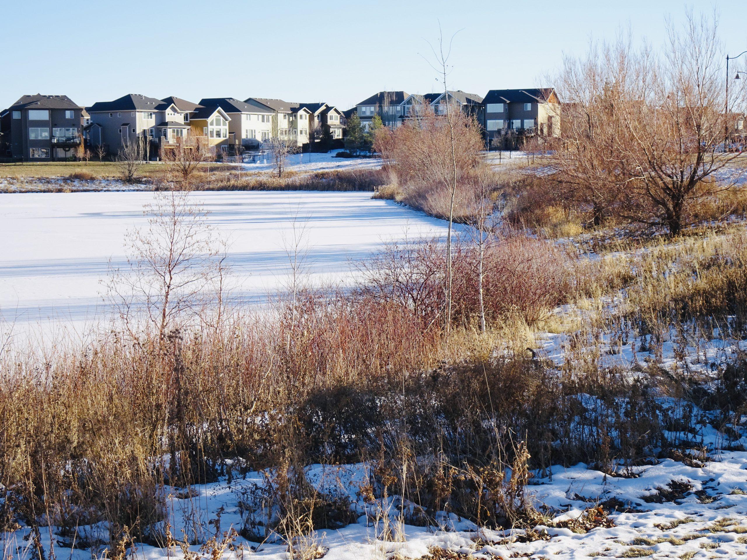 Icy Storm Pond