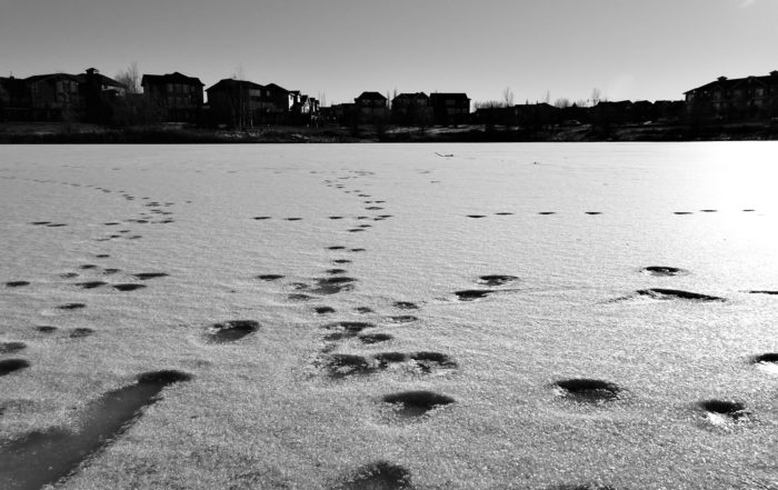 Image of the storm pond, with some animal tracks going across the thin ice.