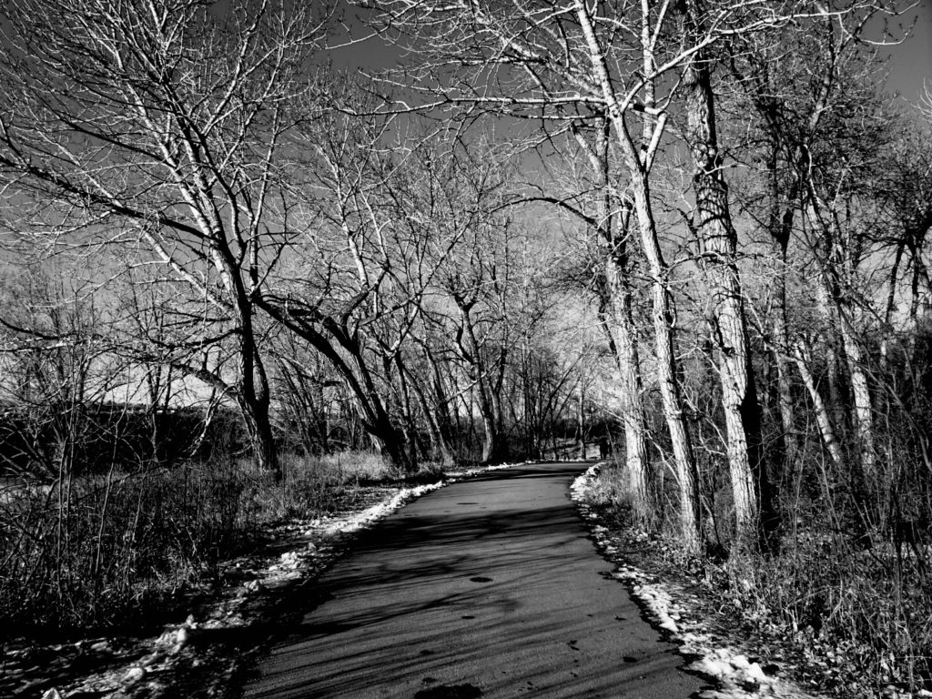 When the way is dark, all you can do is your best. Picture of some spooky trees lining a path