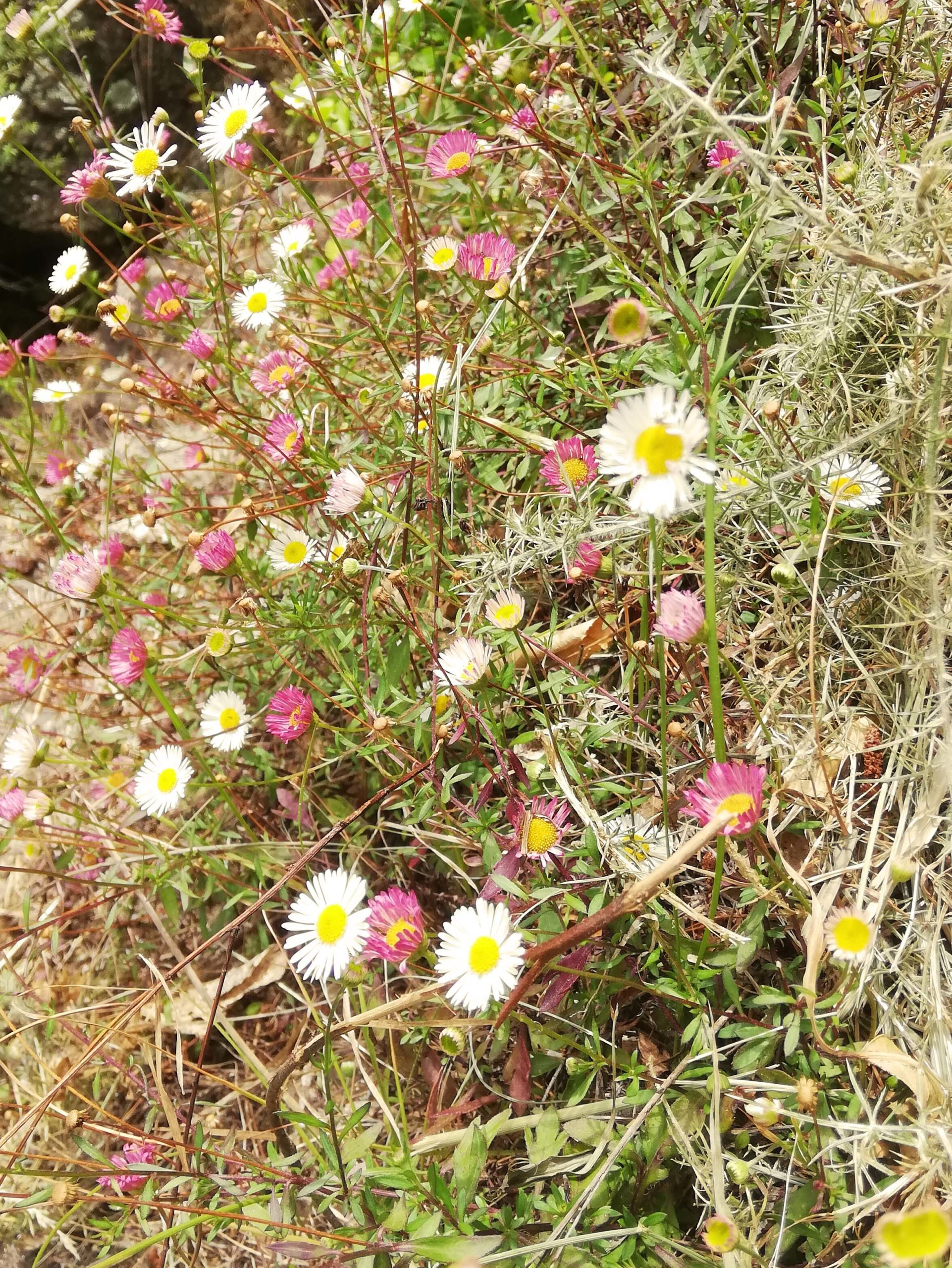 Another year has gone by, and in New Zealand fresh summer daisies are springing up to signal new growth and new hope.